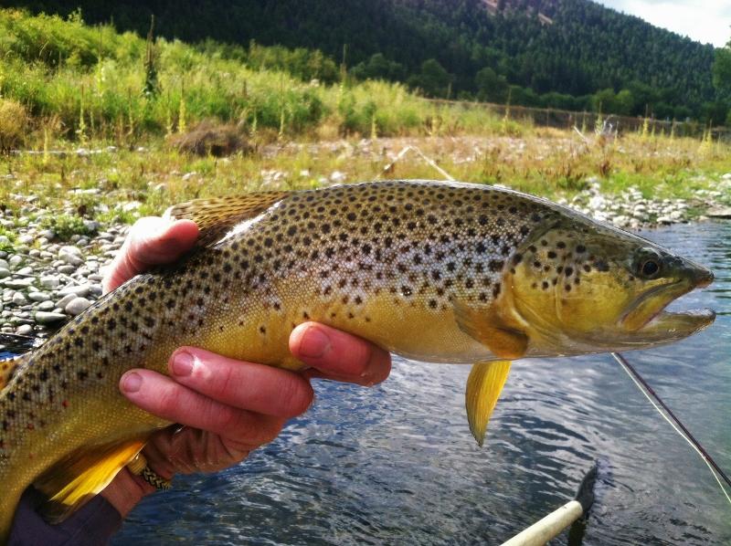Blackfoot river closure lifted by montana fwp missoula for Missoula fishing report
