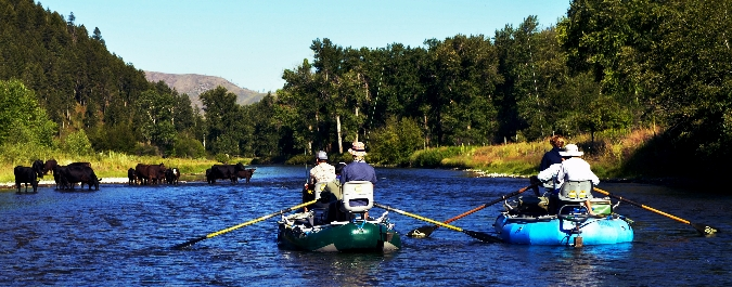 Out of the woods missoula fly fishing report missoula for Missoula montana fly fishing